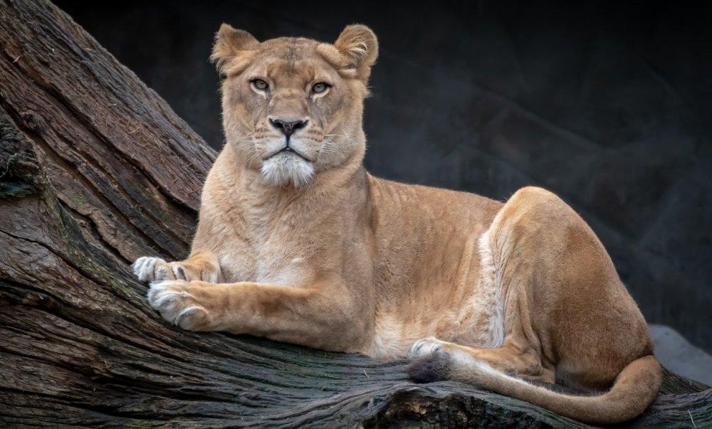 lion-4020794_1280.jpg